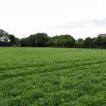 Grass Paddock Turnouts